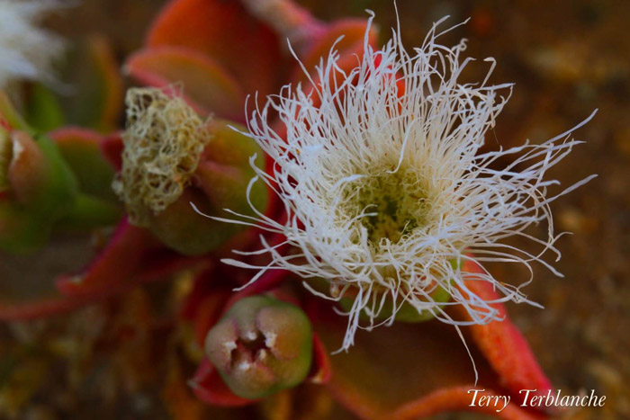 flowers-of-spring