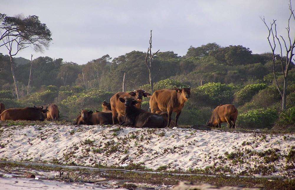forest-buffalo-martha-robbins