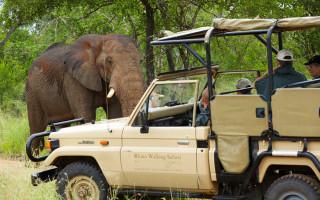 ©Rhino Post Safari Lodge