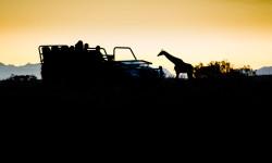 giraffe-on-safari