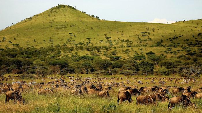 serengeti-migration