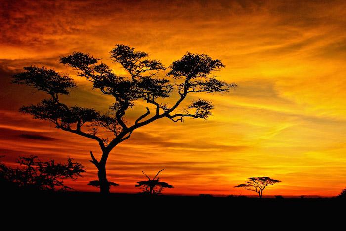 serengeti-sunset