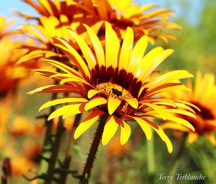 Namaqualand S Sensational Spring Season Africa Geographic