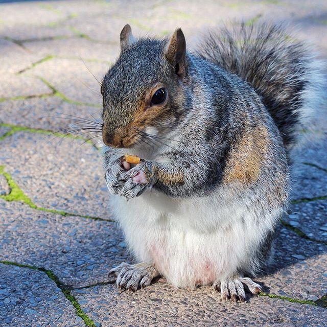 squirrel-in-cape-town