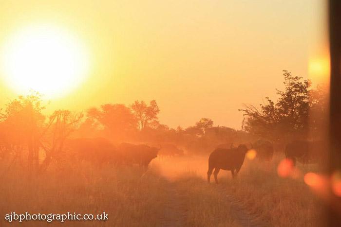 sunset-at-lelobu-safaris