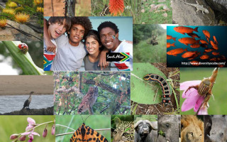 Biodiversity-in-South-Africa