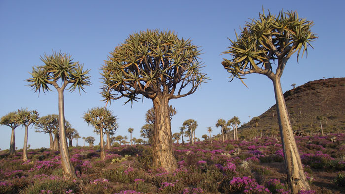 © South African National Biodiversity Institute (SANBI), partner of the Botanical Society of South Africa