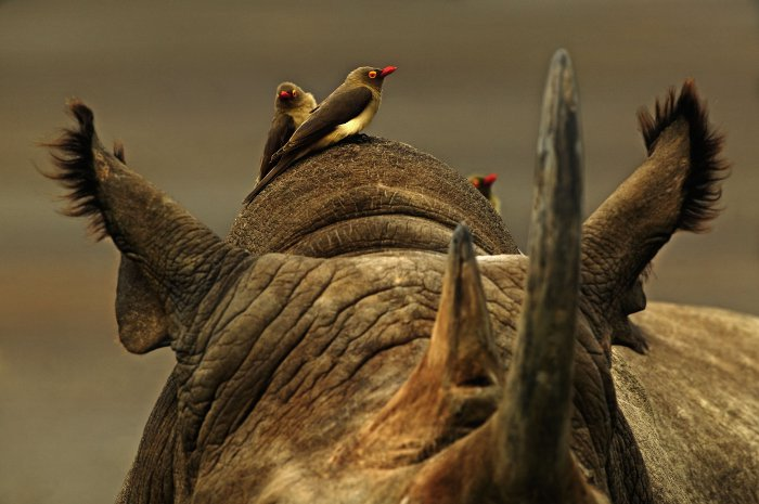 © Martin Harvey WWF-Canon
