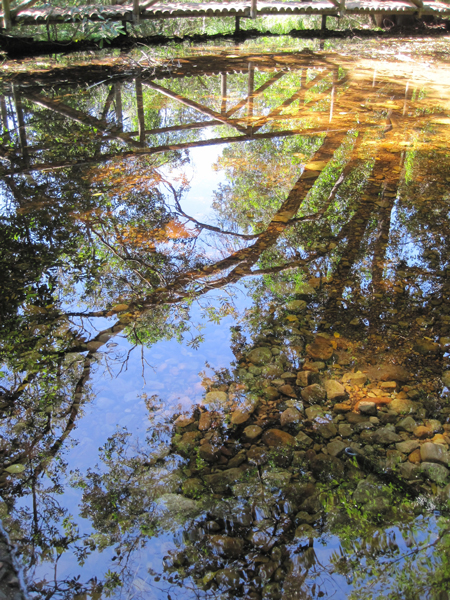 Reflections-kirstenbosch