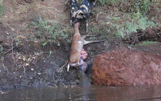 © Sam Mukankaulwa/Chongwe Safaris