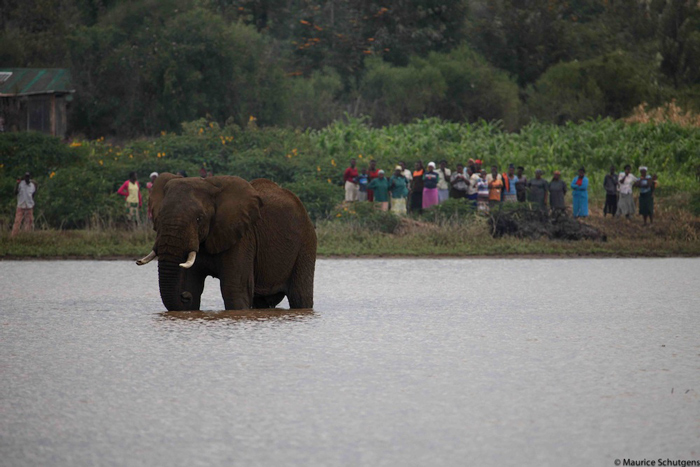community-elephant-conflict-kenya