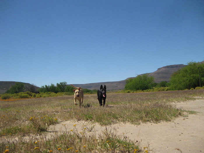 dogs-life-in-cape-town