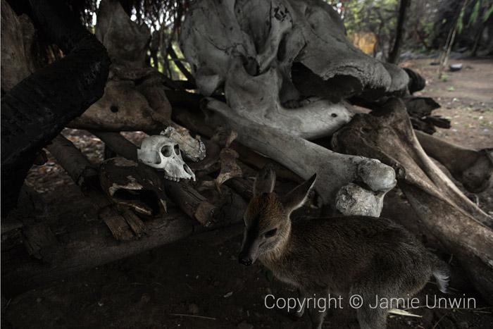 duiker-and-skulls