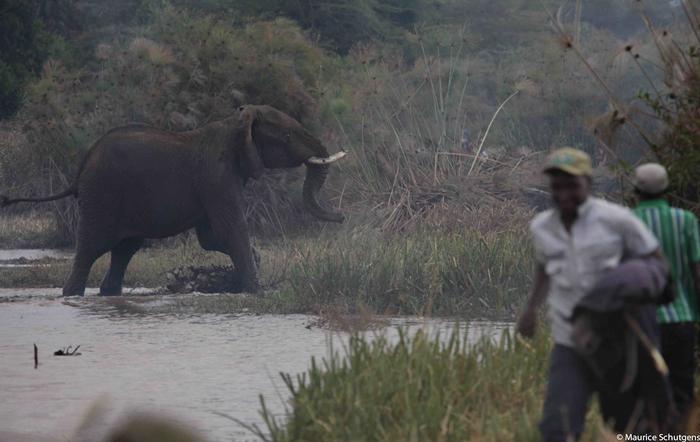elephant-crop-raids