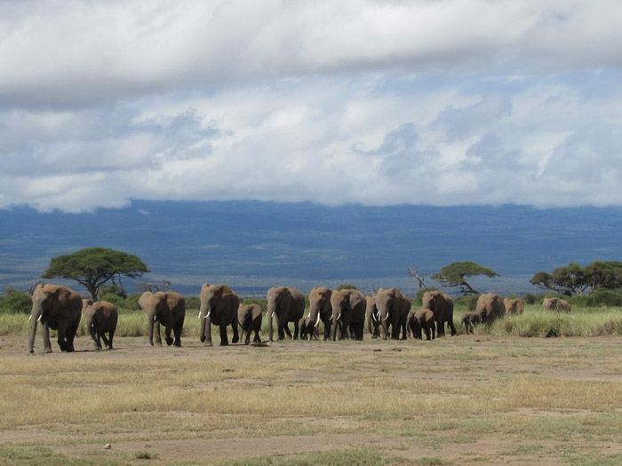 © The David Sheldrick Wildlife Trust