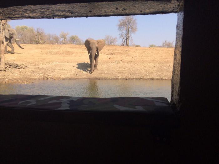elephant-hide-madikwe