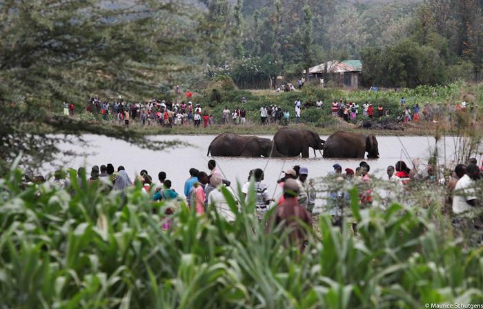elephant-stuck-in-dam-laikipia