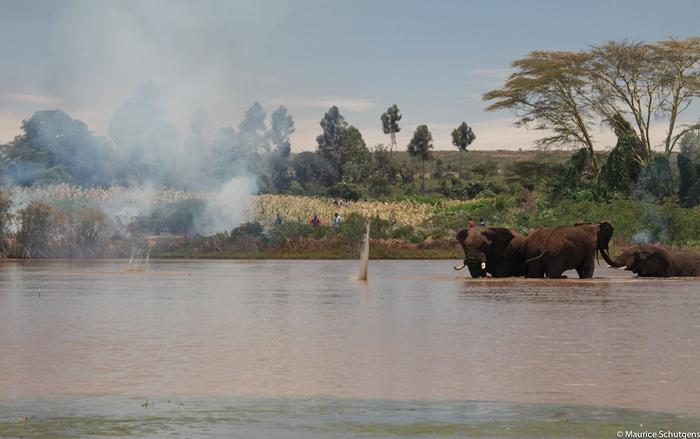 elephants-trapped-in-dam