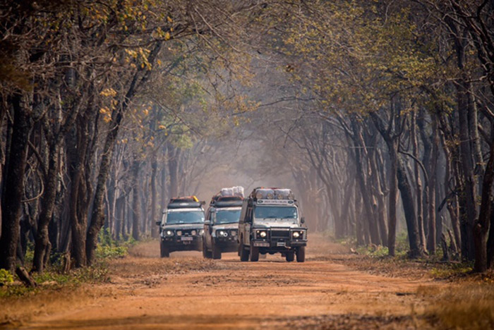 expedition-landies-convoy-and-trees