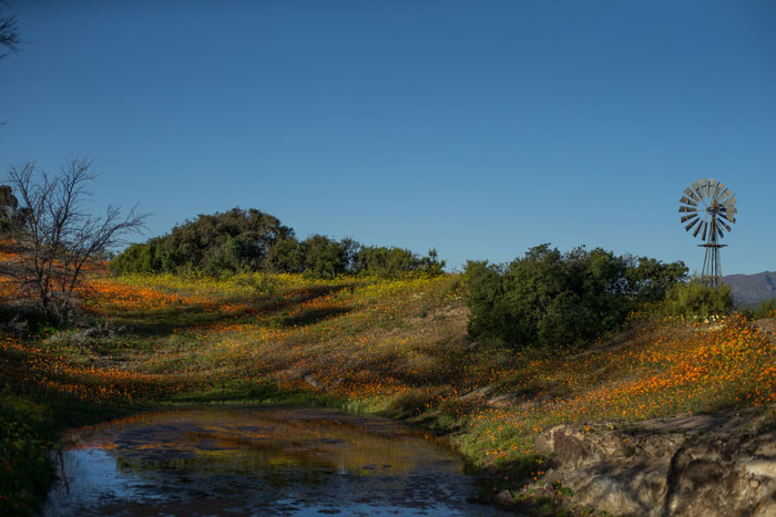 flowers-namaqualand