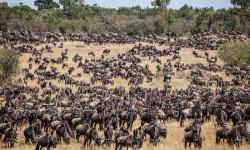 great-migration-kenya