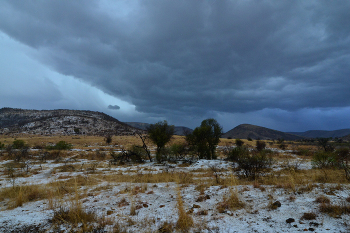 hail-in-the-bush