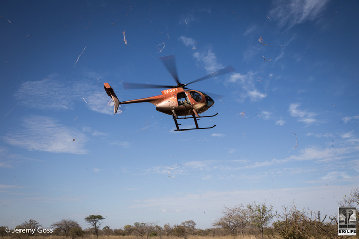 Despite an intense aerial effort by the David Sheldrick Wildlife Trust and the Tsavo Trust, Bahati couldn't be found on the first afternoon of the search