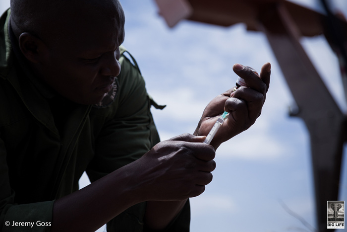 A vet from Kenya Wildlife Service was prepared to dart and treat Bahati if he was found on the first afternoon of the search