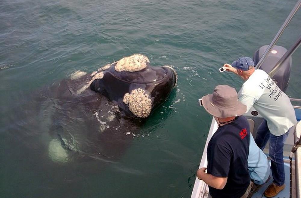 ivanhoe-whales