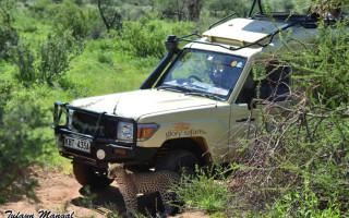 leopard-in-samburu-by-glory-vehicle