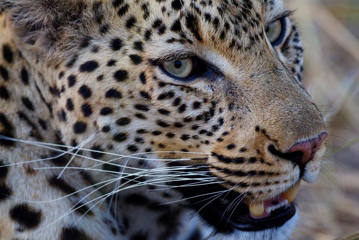 © Ker & Downey Botswana