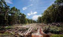 Globally, 18m hectares were lost last year due to both manmade and natural causes, satellite data published by Global Forests Watch shows. Researchers at the US-based World Resources Institute (WRI) who analysed the data said they were surprised by the west Africa finding.
