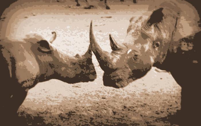 rhino-isimangaliso