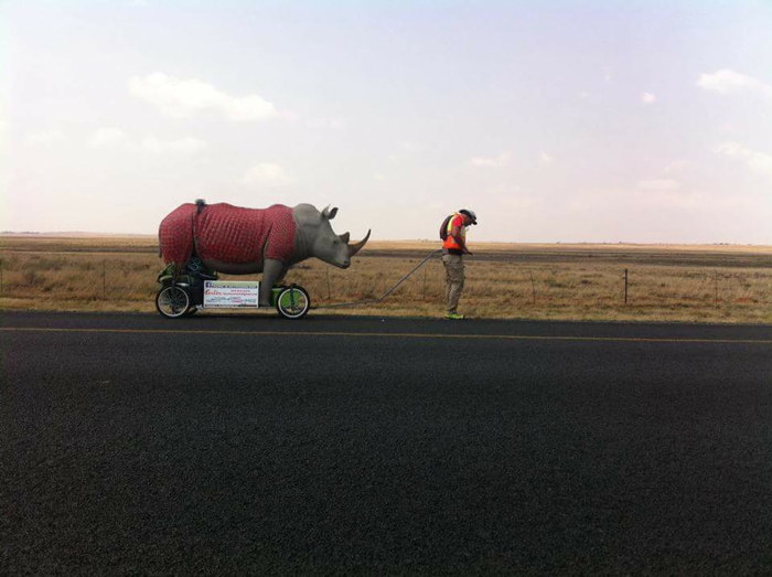 rhino-walking