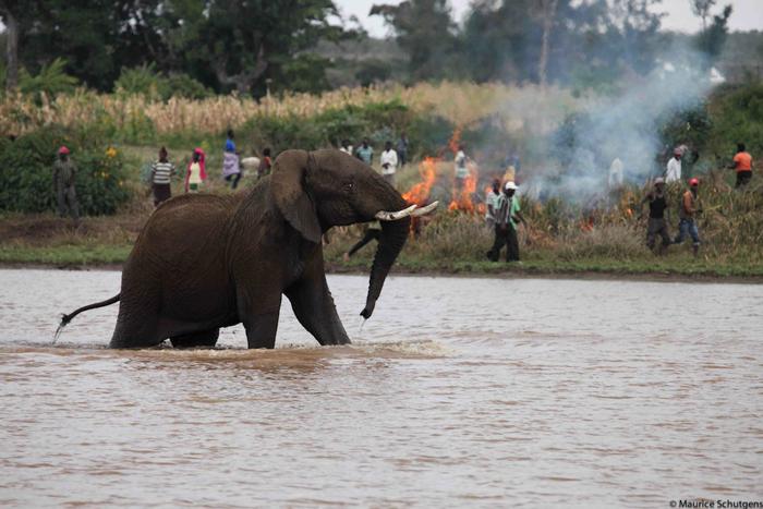 smoking-out-elephants
