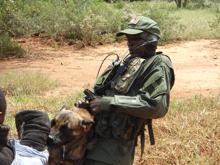 training-dogs-to-prevent-poaching