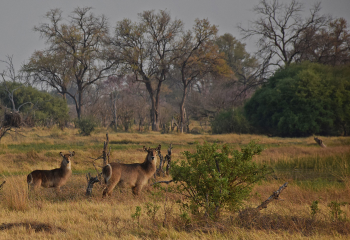 wildlife-in-botswana