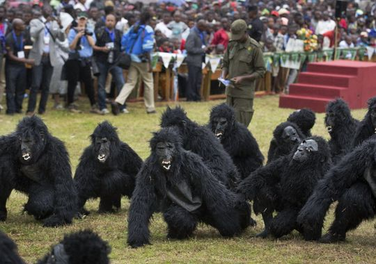 Youths dressed in gorilla costumes to represent the 24 newly-named gorillas, entertain the crowd by mimicking the animals' behavior, at a baby gorilla naming ceremony in Kinigi, northern Rwanda, Sept. 5, 2015. © Ben Curtis, AP