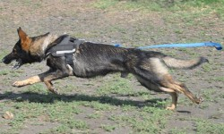 It was a big win for tracking dogs, their handlers and their trainers in court.