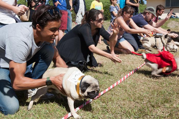 MuizenbergFest-dog-show