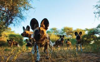 ©Botswana Tourism Board