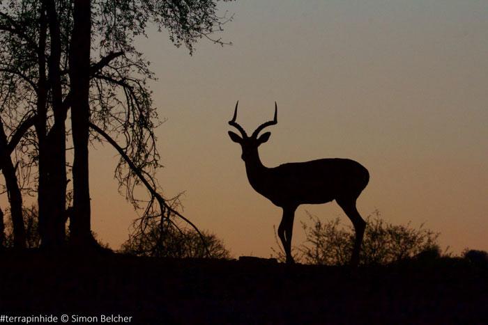 antelope-jacis-lodges