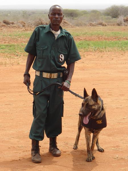 anti-poaching-dog