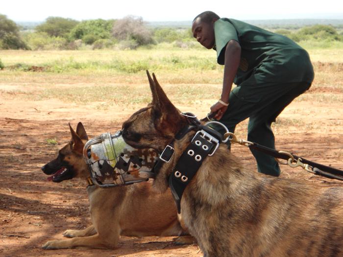 anti-poaching-dogs-bandit