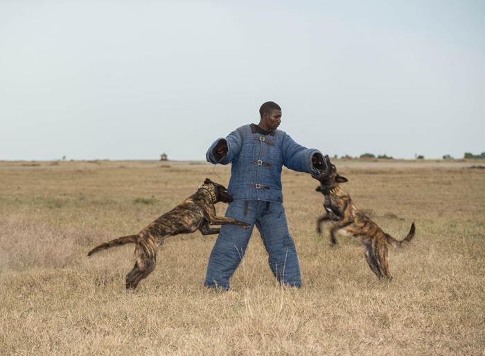 anti-poaching-dogs