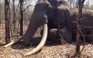 big-tusker-shot-hunter