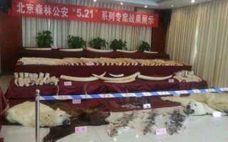 Items confiscated after Beijing Forest Police brought down a major wildlife smuggling ring© TRAFFIC
