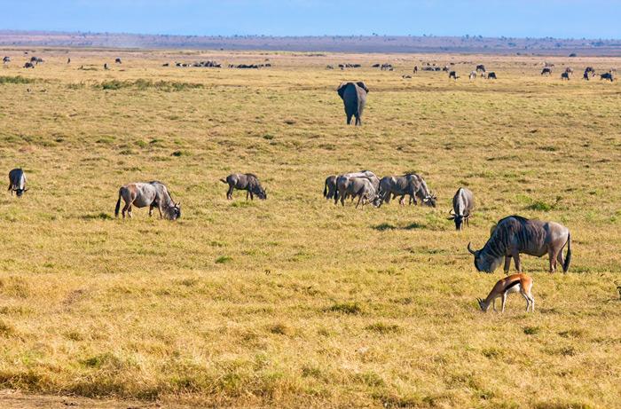 coexistence-in-kenya