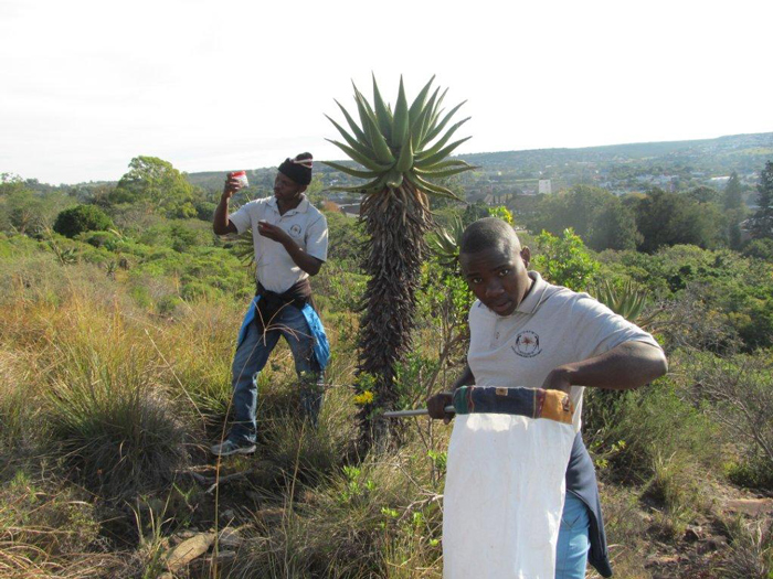 Groen Sebenza pioneers collecting arachnids.