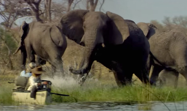 when an elephant charges lessons from dereck joubert